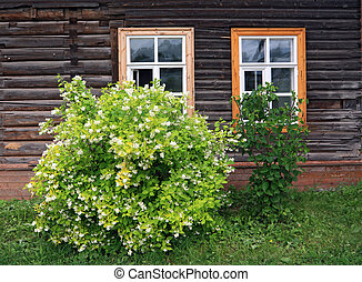 flowering bush near wooden building