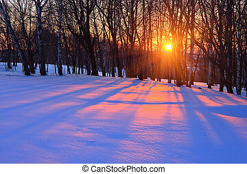 sunset in a winter forest - Red sunset in a winter forest,...