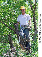 Tree Trimmer - Man in a tree with all his gear to cut the...
