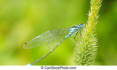 dragonfly on grass, close-up