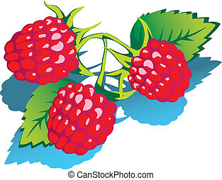 Raspberries. - Raspberries with green leaves. Healthy food....