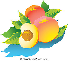 Peaches - Peaches with green leaves Vector art-illustration...