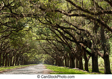 tree lined road to Wormslo w Plantation in Georgia, car in...
