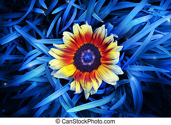 Flower - Abstract stylized photo of a vibrant sunflower in...