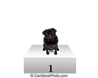 First Place - A black pug sitting on a podium