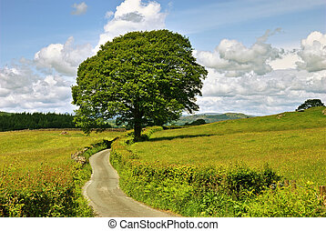 Single tree and lane. - A single tree and a lane in meadows...