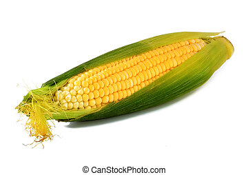 Ripe ear of corn isolated on a white background