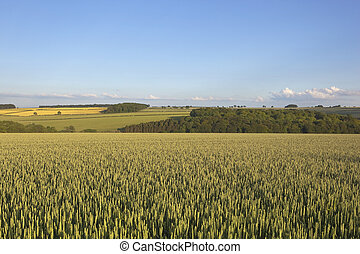 agricultural landscape - an agricultural landscape with a...