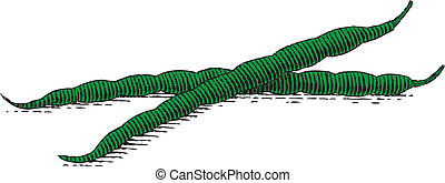 Woodcut Green Bean - Woodcut style illustration of green...
