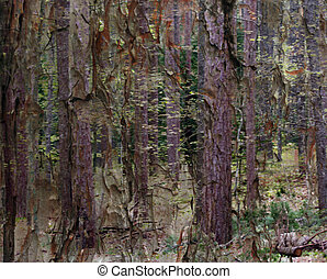 forest of illusion - composite photo tree trunks