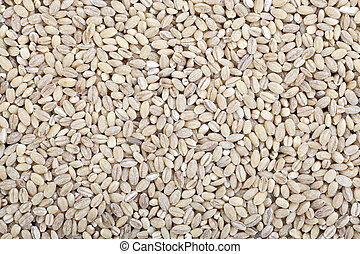 Barley Wheat - Barley wheat grain food background