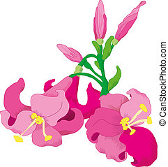 Lilies flower, vector illustration