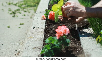 Planting a flowerbed. - Planting in a flowerbed using small...
