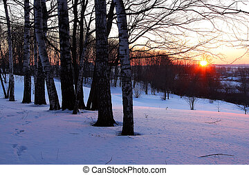 Winter park at sunset