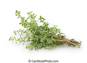 Orange Scented Thyme isolated on white background