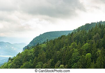 Misty mountain with forest on slopes