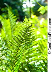 Young green fern with blurry background