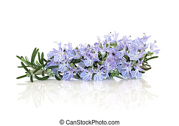 Rosemary Herb Flower - Rosemary herb flower leaf sprig...