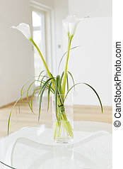 Lily of the Nile (Zantedeschia aethiopica) flowers in a...