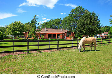 Un, caballo, rancho, casa, cerca