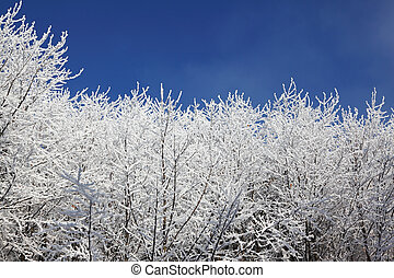 Snow-covered tops of the trees