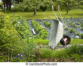 Wheelbarrow in an organic kitchen garden