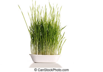 Grass in dish isolated