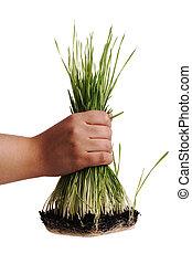 Uproot grass