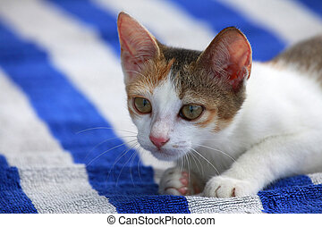 kitten - The homeless cat lays on a towel