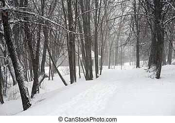 snowstorm - A snowstorm