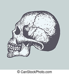 Human Skull - Sketch of Human Skull Vector Computer Graphics...