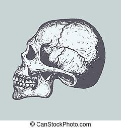 Human Skull - Sketch of Human Skull. Vector. Computer...