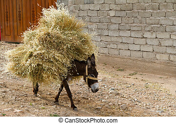 Donkey with the load - The donkey carring the heap of hay....