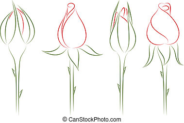 Rosebuds. Vector illustration. - Four drawing buds of roses....