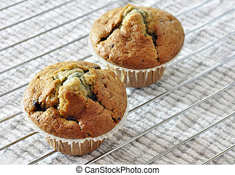 Two blueberry muffins - Two freshly baked blueberry muffins