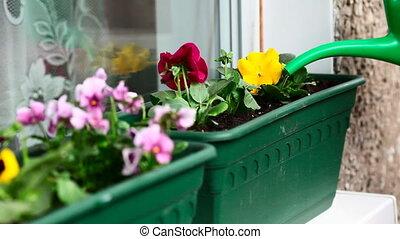Watering - Watering indoor plants