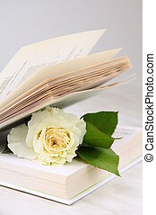 white rose inside the book