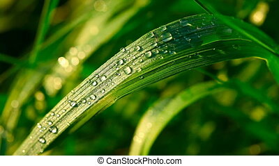 Dew - Dew on the grass