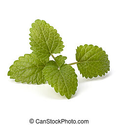 Bergamot mint or balm isolated on white background