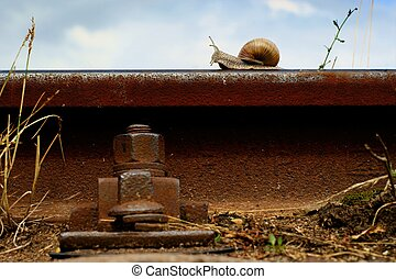 snail on a railway rail