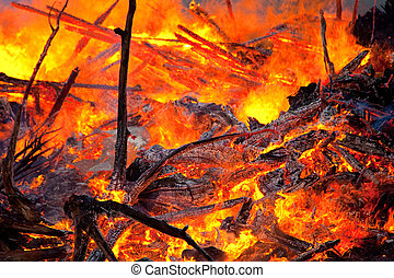 Close up photo of forest fire