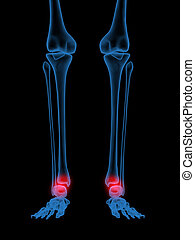 X-Ray of Human ankle