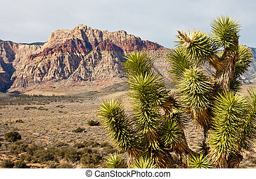 Yucca Plant in Desert with Mountains in Background - A green...