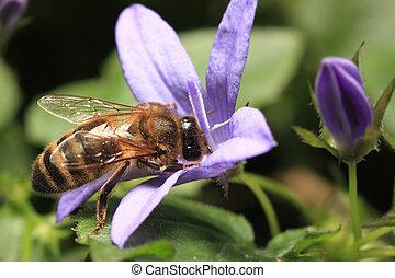 Bee sucking honey from purple flower