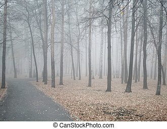 Heavy fog - Early misty morning in a pine wood