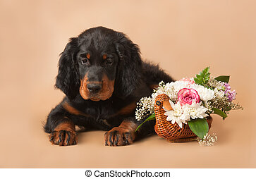setters puppy with flowers