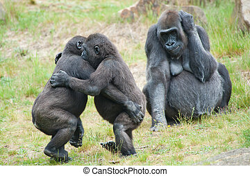 Two young gorillas dancing while the mother is watching