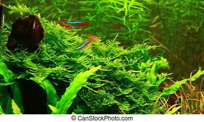Aquarium in natural style