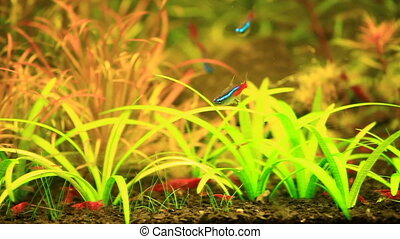 Aquarium in natural style - Love of nature