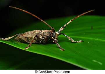 Long horn insect - watching you